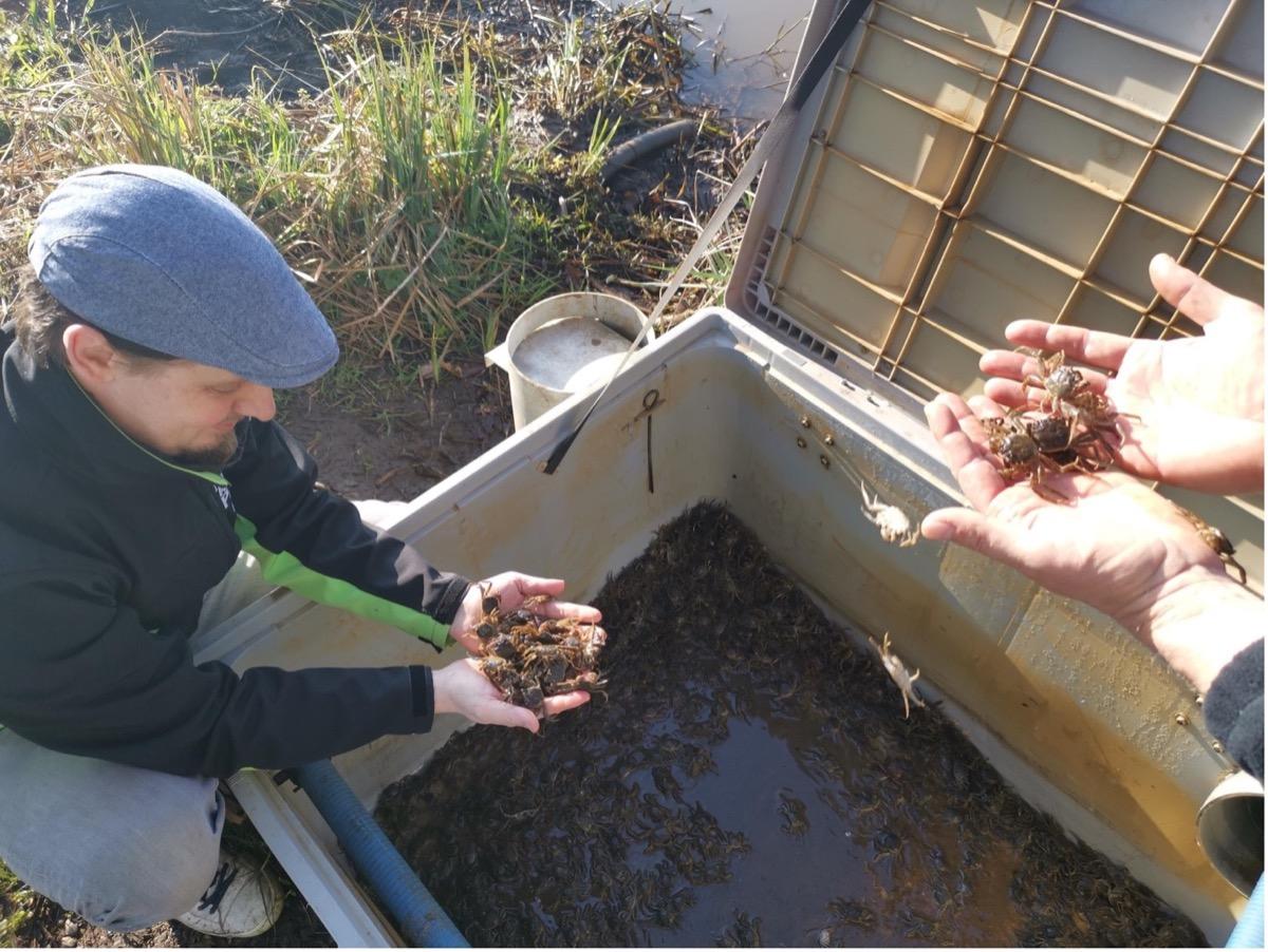 bioloog met krabben in de hand
